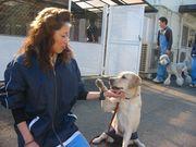 ちば愛犬2006年度卒業D2A
