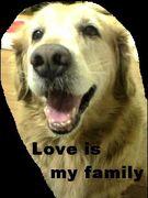 愛する私の家族