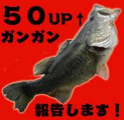 琵琶湖バス釣りチーム55バイツ