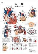 心臓病を守る会