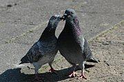 鳩に話しかけてしまう人