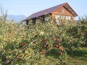 りんごの丘