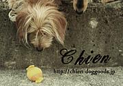 Friend of Chien