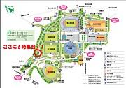 駒沢公園で早朝ジョギングと体操