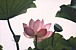 屋タイ飯&yoga&relax&nature
