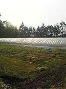 農家バンギャ
