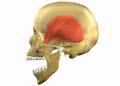 顎関節症は簡単に治る!