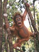 猿を木から落とす団!