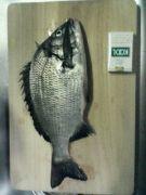 大洗周辺釣り情報