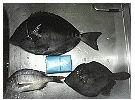 全日本爆釣連盟 ( 全爆連 )