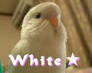 白い鳥愛好会★