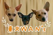 東北WAN's
