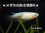 ★メダカのある情景R★