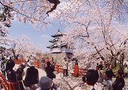 弘前公園のさくら