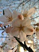 April -NICO Touches the Walls-