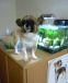 ♡ウチのmix犬♡一番