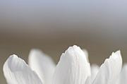 366日の誕生花と花言葉