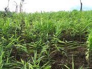 東南アジアの農業開発