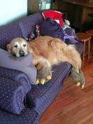 皆の愛犬闘病記