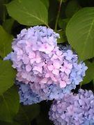 ☆植物LOHAS☆Natur