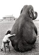 ゾウさんを愛してる+