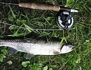 忍野の鱒釣り