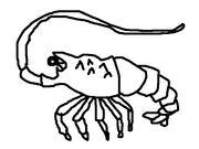 三度の飯より甲殻類。