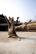 全日本猫に声をかける会