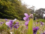 桜丘すみれば自然庭園(公園)