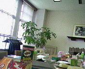 東洋英和中高で教育実習☆2008