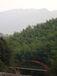 森林保全が仕事