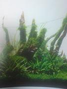 ☆☆水草と僕と時々熱帯魚☆☆