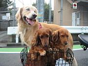 ペットの検疫制度