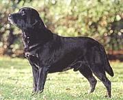 大型犬を誇る会