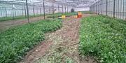 農業サークル