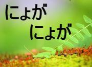 にょがにょが。゚+.(*´`*)。+.
