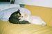 犬と猫の写真集