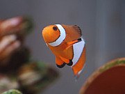 魚の会(笑)