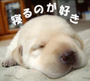 寝るのが好き in mixi