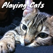 Playing Cats