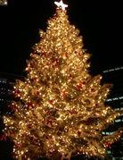 ホワイトクリスマス in TOKYO