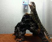爬虫類初心者の会