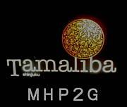 チームTMC 2G