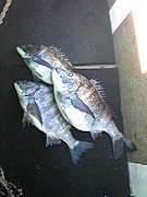 太平洋黒鯛釣人会と仲間達