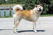 秋田犬を秋田県から追放する族