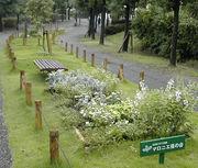 まちの庭 コミュニティガーデン