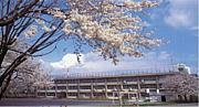☆大泉学園桜中学校☆