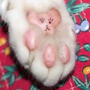 愛しの肉球 (にくきう)【猫編】