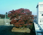 ♪横浜翠嵐高校 第59回生♪
