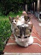 猫萌えの会